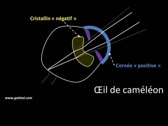 Le couple cornée (lentille fortement positive) et cristallin (lentille faiblement négative) de l'œil du caméléon induit un grossissement important de l'image rétinienne, et offre une importante capacité de mise au point (accommodation).