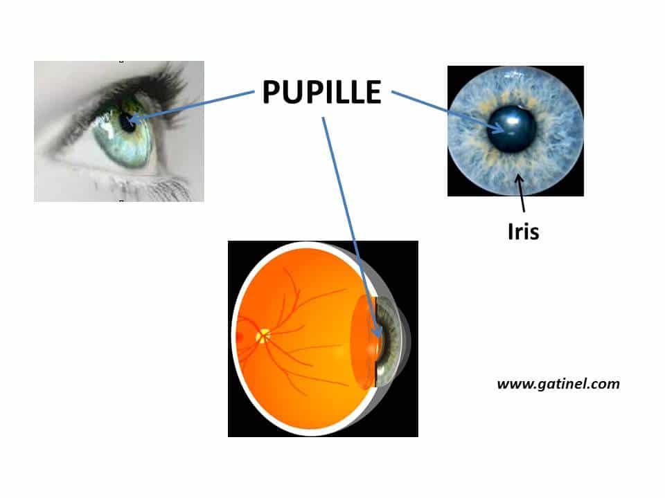 La pupille est l orifice qui perfore l iris en son centre. Chez l homme,  son pourtour est circulaire. Le diamètre de la pupille varie entre 2 et 8  mm ... 64b7692184b