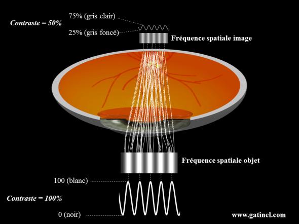Modulation du contraste de l image retinienne frequence spatiale 50 pc