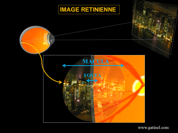image formed on the retina