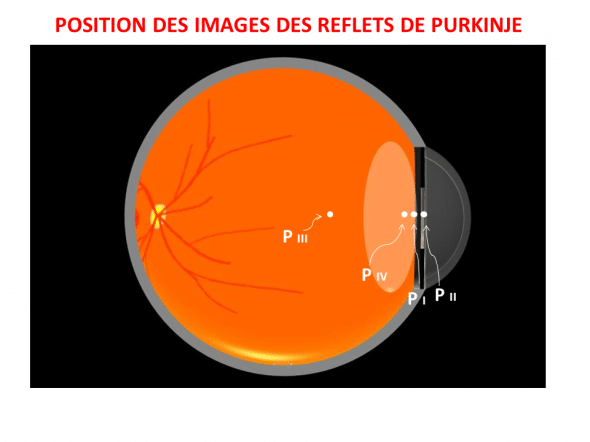 images Purkinje position